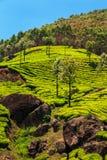 Teeplantagen in Munnar, Kerala, Indien Lizenzfreie Stockfotos