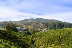 Teeplantagen, Nuwara Eliya Stockfoto