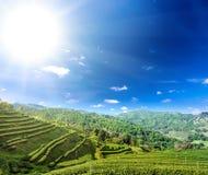 Teeplantagenbearbeitung in den Nord-Thailand-Hochlandhügeln Lizenzfreie Stockfotografie
