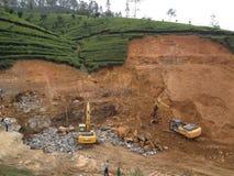 Teeplantagenerweiterung Stockfotografie