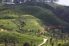 Teeplantagenhügel Lizenzfreie Stockfotos