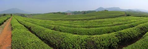 Teeproduktion Lizenzfreies Stockbild