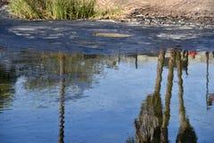 Teer bij La Brea Tar Pits royalty-vrije stock afbeeldingen
