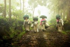 Teet som väljer bönder, kom hem, når det har tagit teblad i fälten Wonosari Lawang öst Java January 21, 2019 royaltyfri fotografi