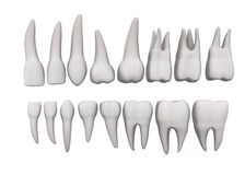 Teeth - 16 set Royalty Free Stock Photo