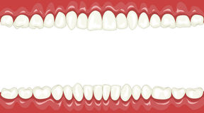 Teeth Royalty Free Stock Photography