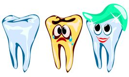 Teeth. Illustration affected by caries and shiny, regularly brushing your teeth Royalty Free Stock Image
