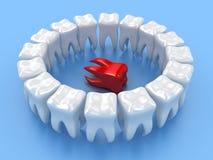 The teeth Stock Photo