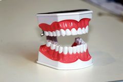 Teeth anatomical model as a background Stock Image