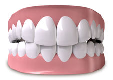 Free Teeth And Gums Closed Royalty Free Stock Images - 29598049