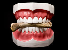 Teeth and Bone Royalty Free Stock Images