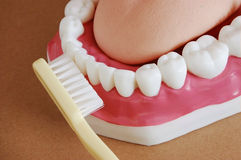 Teeth and brush. A tooth brush and a model mouth royalty free stock image