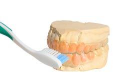 Teeth Cast. Casting of teeth isolated on white Stock Photos