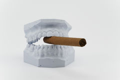 Teeth and cigar. Teeth model and cigar on white Stock Images
