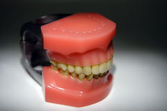 Teeth cleaning instructions model Royalty Free Stock Image