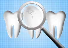 Teeth for dental care Royalty Free Stock Photo