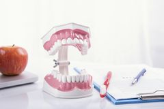 Teeth denture or dental jaw model, dentistry instruments. In dentist`s office stock images