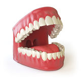 Teeth or dentures  on white. Open human upper and lower Royalty Free Stock Photography