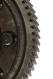 Teeth of gear cogwheel, isolated on white background Royalty Free Stock Images