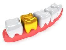 Teeth on gingiva isolated on white back. royalty free illustration