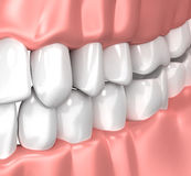 Teeth Gum Human Mouth Anatomy - 3d illustration Stock Photography