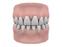 Teeth and gums. In white background. Easy to isolate royalty free illustration