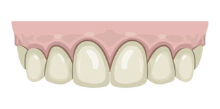 Teeth gums Royalty Free Stock Images
