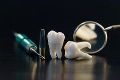 Teeth and implants. Real Human Wisdom teeth and Dental instruments Stock Photo