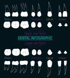Teeth Infographic 08 B-17 Royalty Free Stock Photos