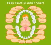 Teeth Infographic vector. Baby prelimanary tooth eruption chart. Vector illustration. Editable image in bright colors on a green background.Children teeth Stock Image