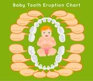 Teeth Infographic vector Stock Image