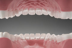 Teeth and Inner Mouth Royalty Free Stock Images