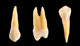 Teeth isolated on black Stock Images