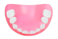 Teeth of the lower jaw. Vector illustration Stock Photography