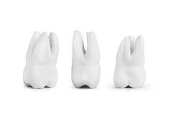 Teeth made of gypsum Stock Photo