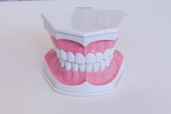 Teeth mode Royalty Free Stock Photography