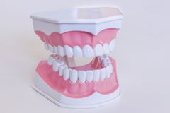 Teeth mode Stock Images
