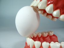 Teeth model. Plastic dental  ,chattering teeth,mold of a full set of human teeth stock images