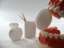 Teeth model. Plastic dental  ,chattering teeth,mold of a full set of human teeth Royalty Free Stock Photography
