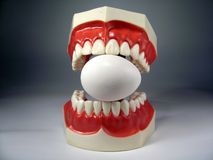 Teeth model. Plastic dental teeth model and Egg royalty free stock photo