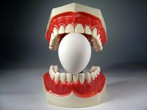 Teeth model. Plastic dental teeth model and Egg Stock Photography