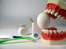 Teeth model. Plastic dental teeth model and Egg royalty free stock photos