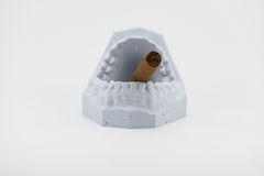 Teeth model and cigar. On white Royalty Free Stock Image