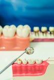 Teeth model Royalty Free Stock Photography