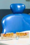 Teeth model Stock Photography