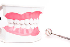 Teeth model and dental instruments Stock Image