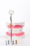 Teeth model and dental mirror Stock Photography