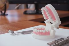Teeth model on dentist`s table in office, dental and medical concept royalty free stock photo