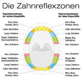 Teeth Reflexology Analogy Chart German Stock Photos