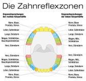Teeth Reflexology Analogy Chart German. Teeth reflexology chart - permanent teeth and their corresponding internal organs. Isolated vector illustration over Stock Photos